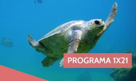 Programa 1×21: Premios MIN, Bandas Sonoras y Desayunos Saludables