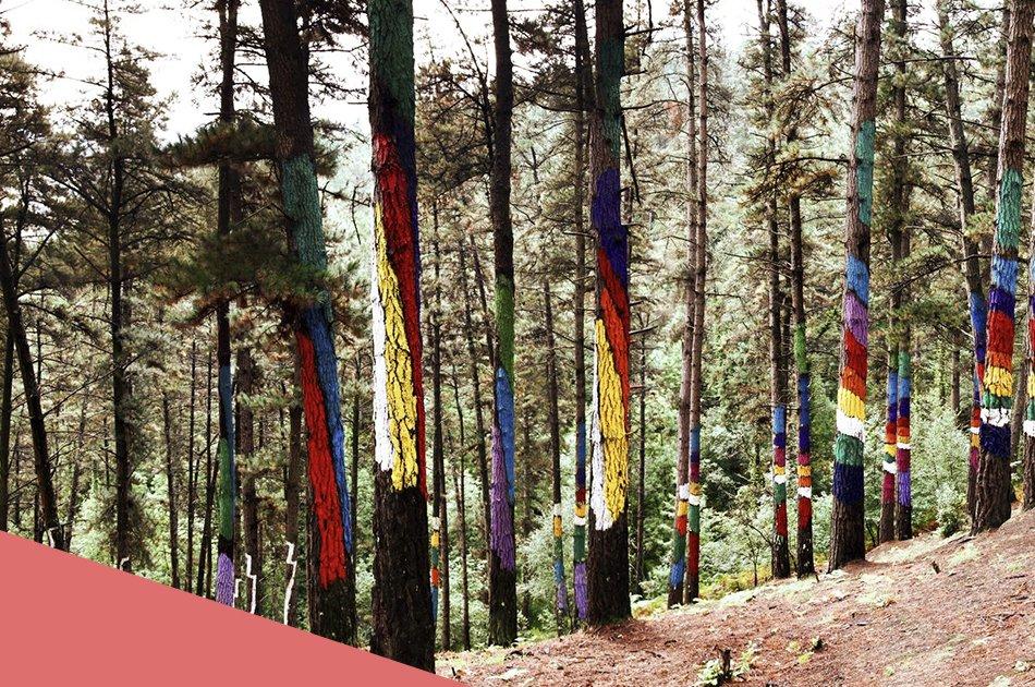 Agustín Ibarrola: Pintor de bosques